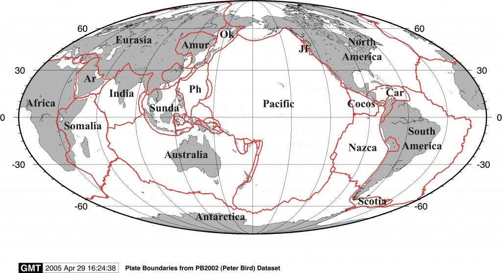 Global moll bird